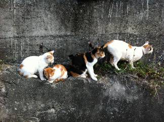 Yasagure_cats