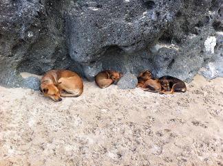 Yasagure_dogs