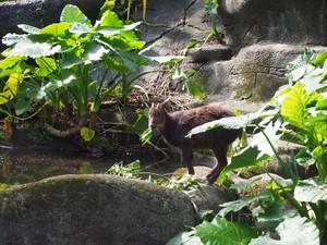 Zoo_deer