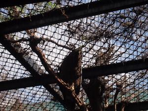 Zoo_hawk