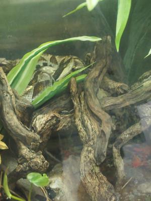 Zoo_snake_2