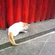 紅いシャッターと猫