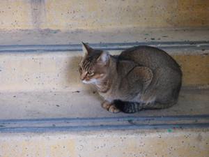 Cat1_3